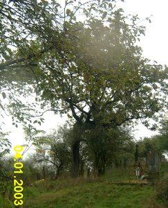 гроб.2